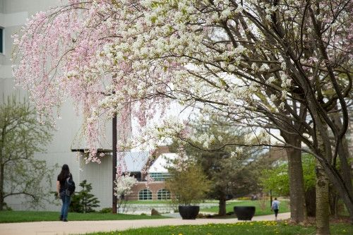 Link to Spring 2019 syllabi